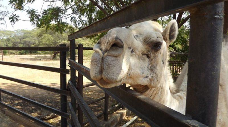 Zoológico zuliano cierra sus puertas por falta de alimentos para los animales