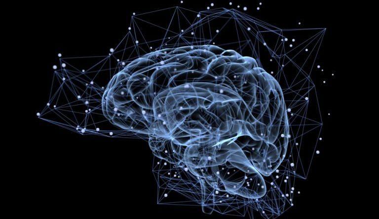 """Descubren el """"interruptor"""" cerebral que controla la quema de grasas del cuerpo"""