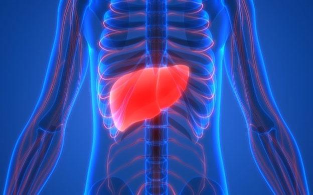 Descubren una proteína para luchar el cáncer de hígado